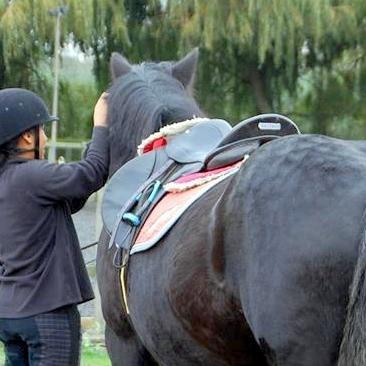 Adjusting horse's tack