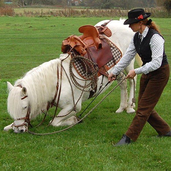 camargue stallion taking a bow