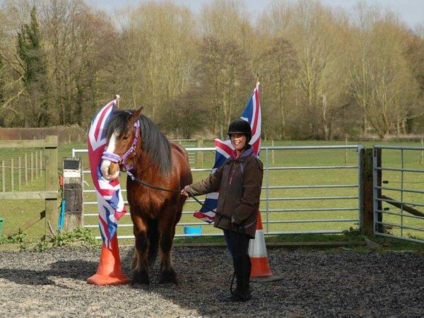 horse agility